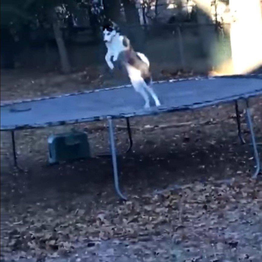 Что делают собаки, когда думают, что их не видят