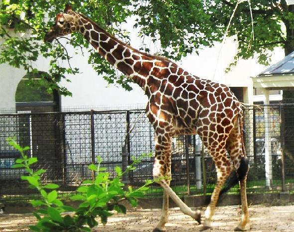 Московский зоопарк стал работать на час меньше