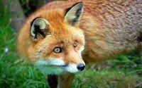 Мое фото GoldFox 119000