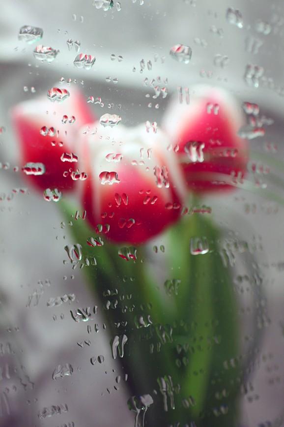 Фото цветы в зеркале