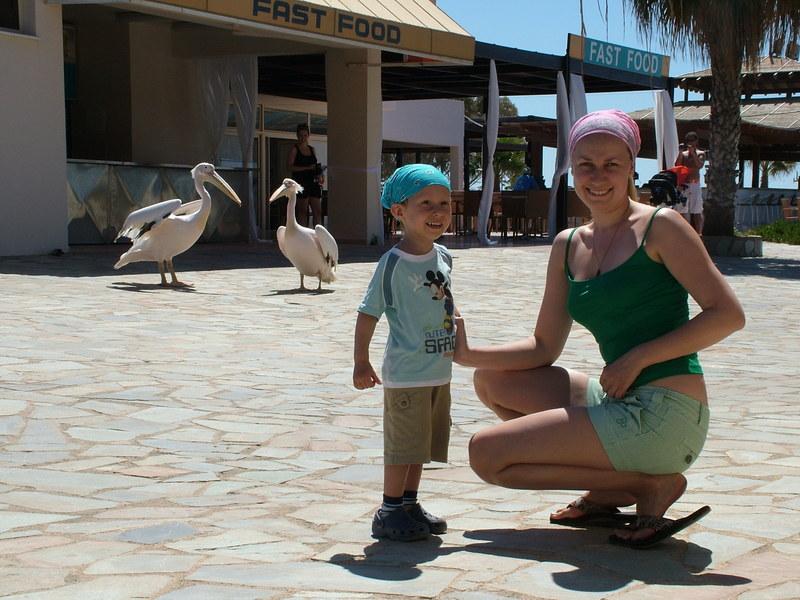 Пеликаны  на пляже Нисси