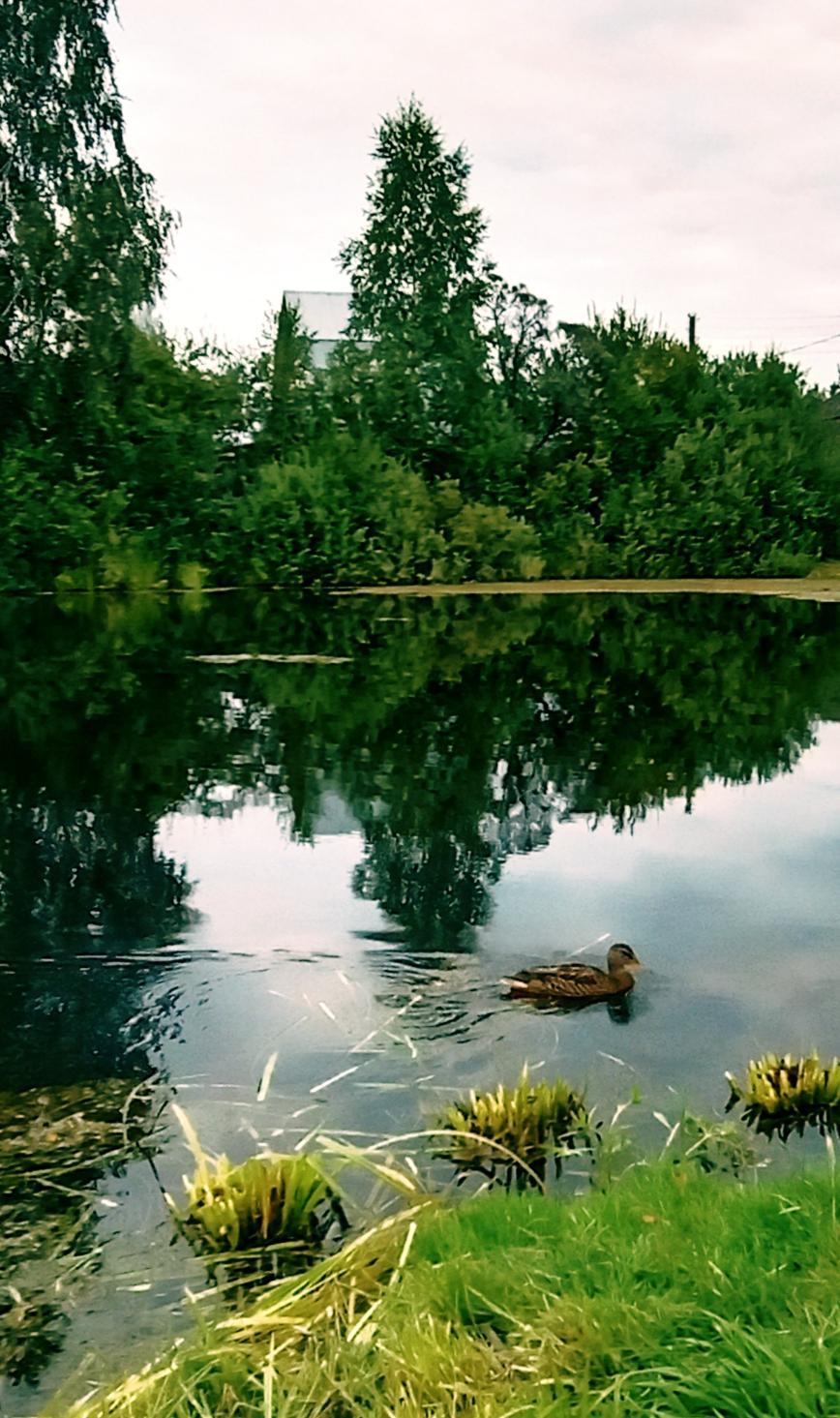Автор: SveTLana, Фотозал: Родные просторы,