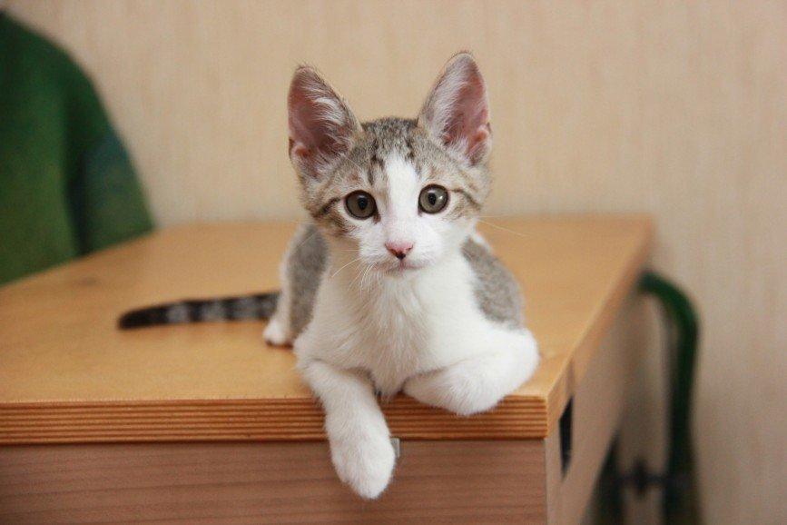 Ищет дом Пармезан. Один из котят, найденных в овраге в завязанном пакете в недельном возрасте. Как и почему этот пакет оказался в овраге мы не знаем. Знаем лишь что котятам немыслимо повезло! И по великой случайности их обнаружили достаточно быстро - котята не успели замерзнуть и не слишком долго были без еды. Их выкормила приемная мама-кошка.  Пармезан - котопес! Активный и разумный. Очень человекозависимый, любит людей беззаветной любовью! Любит наблюдать за любыми человеческими занятиями. Да так внимательно, как будто сам хочет научится мыть посуду, готовить, сверлить и пилить. И спать любит тоже вместе с человеком. Желательно в обнимку/  Пармезану 3 месяца. Он полностью привит и имеет ветеринарный паспорт.  Только в добрые и ответственные руки!  Приезжайте знакомиться! 8-926-526-50-18 Женя