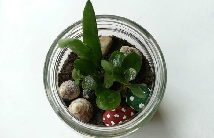 Праздник для души: мини-сад в банке своими руками