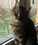 Мое фото lelikkorolev