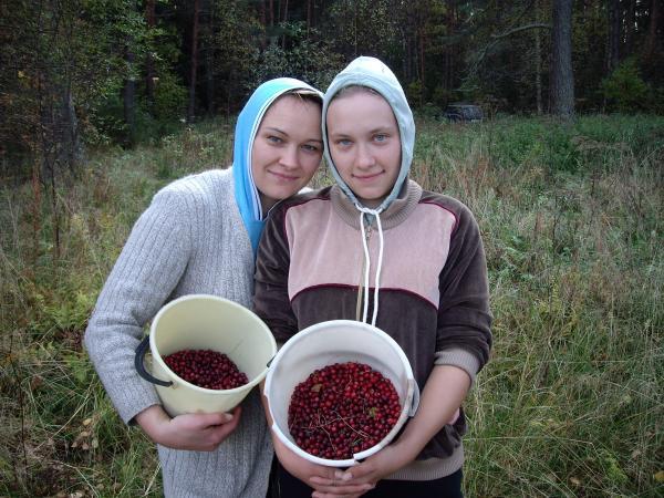 """Мы с Наташей и Сашей ходили на """"Золотое""""болото за клюквой"""