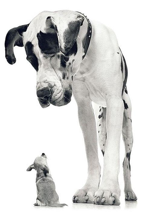 Тим Флэч и его портреты собак