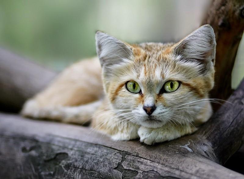 Картинки коты и природа вместе составляют