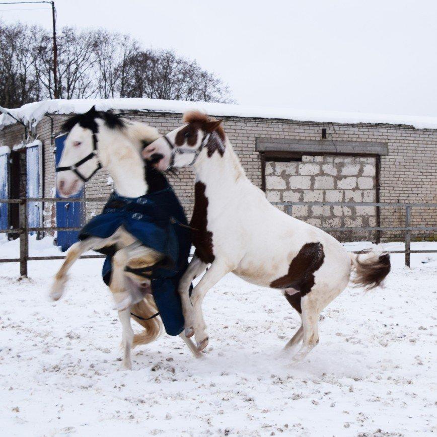 Автор: КрутЫшкА, Фотозал: Я - очевидец,