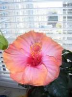 Мое фото Fleur-80