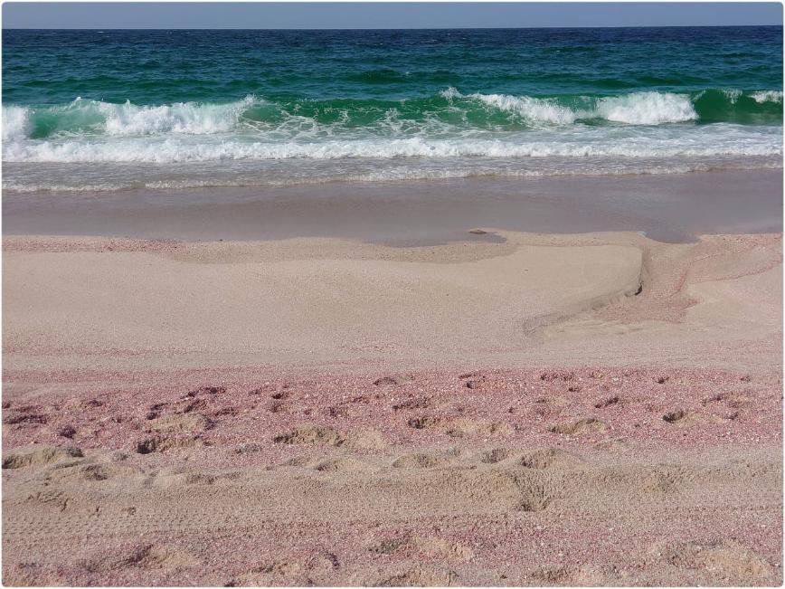 Автор: WOman, Фотозал: Туристические зарисовки, Розовый пляж.
