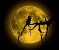 Мое фото кошка в ночи