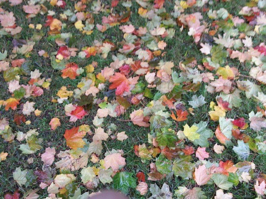 Автор: Varta, Фотозал: Родные просторы, Осенний газон