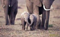 Милые детеныши-слонята