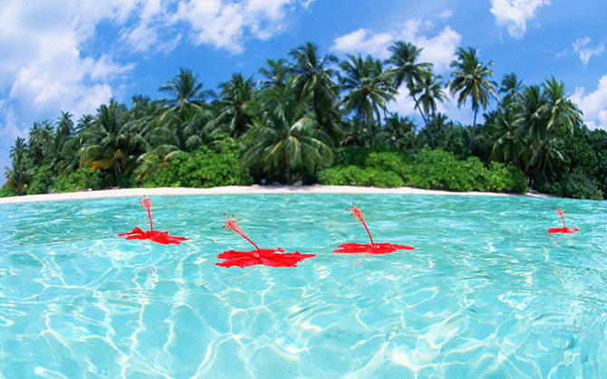 Красивейшие места мира: Мечта многих туристов, Мальдивские острова. Настоящий тропический рай на Земле, фотографии которого уже сами по себе приводят в восторг. Ну