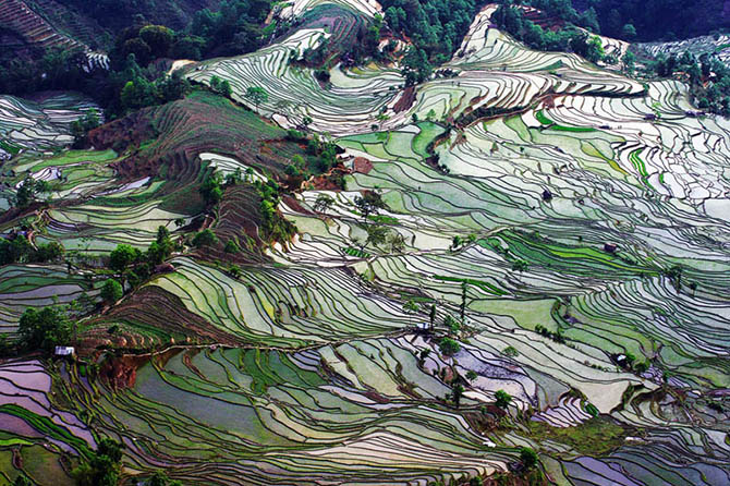 Красивейшие места мира: Рисовые террасы Лунцзи в Китае настолько красивы, что мы не смогли выбрать всего одну фотографию. Это одно из самых красивых