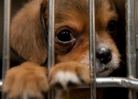 Животные из приютов ждут Вас 17 и 18 августа в ЦДХ