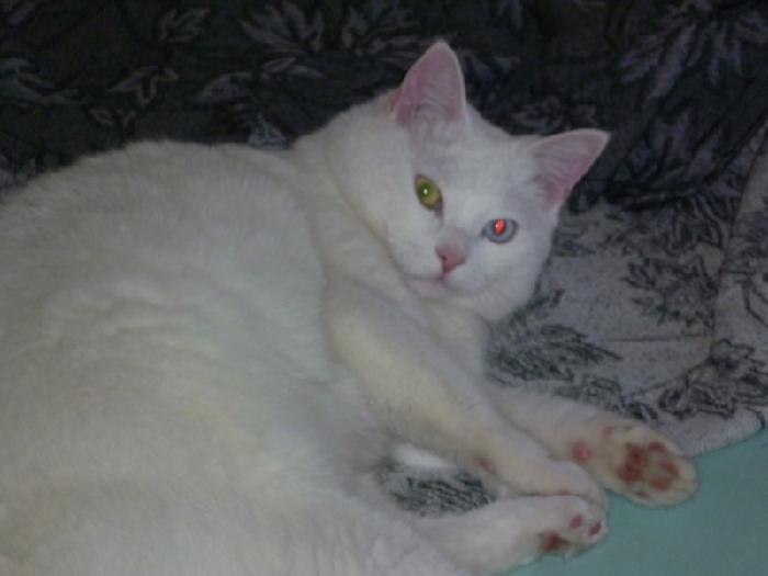 Остроумный дети назвали кота Пушистым, хотя кот абсолютно гладкошерстный. С таким же успехом можно было назвать Полосатиком