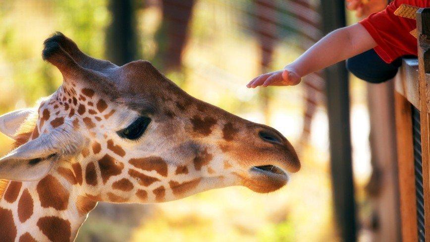 Мини-зоопарки появятся в каждом округе Москвы