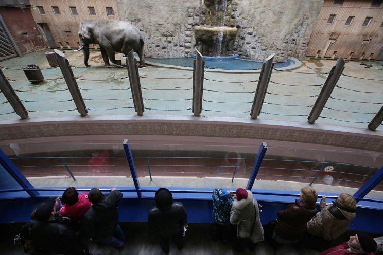 Московский зоопарк предложит «пообщаться» по телефону с питомцами