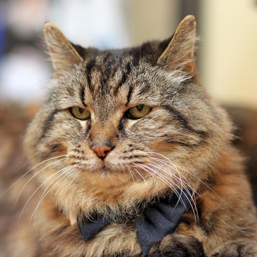 Самый старый в мире кот