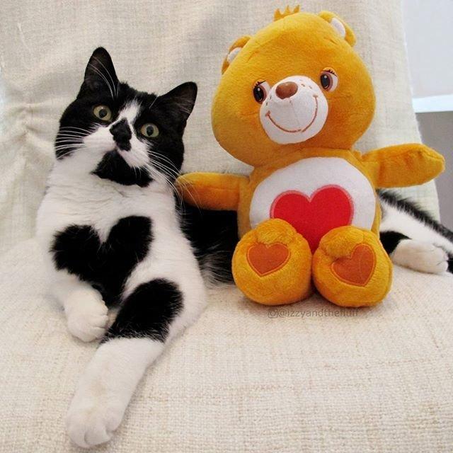 Сердечный кошачий инстаграм:
