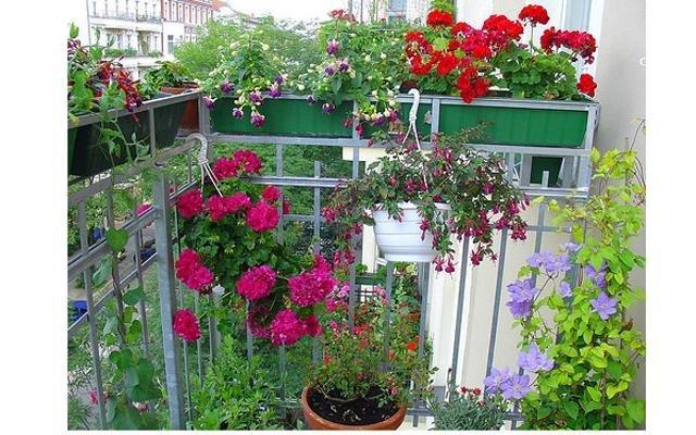 Цветущий балкон или балконное цветоводство. - ростов портал..