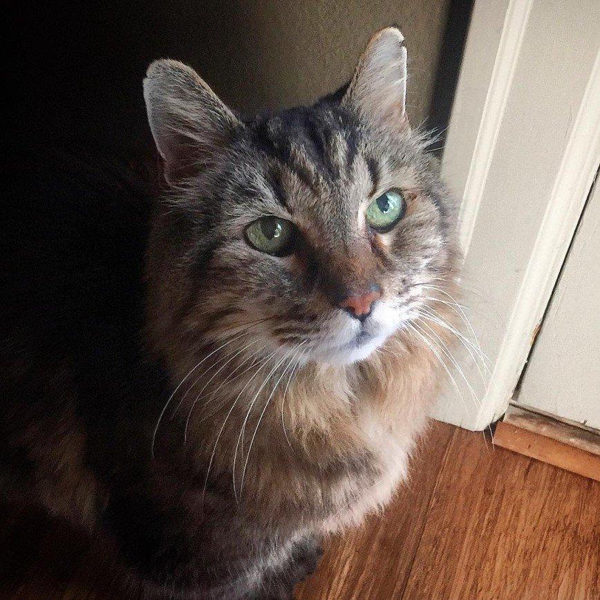 Самый старый кот в мире пропал