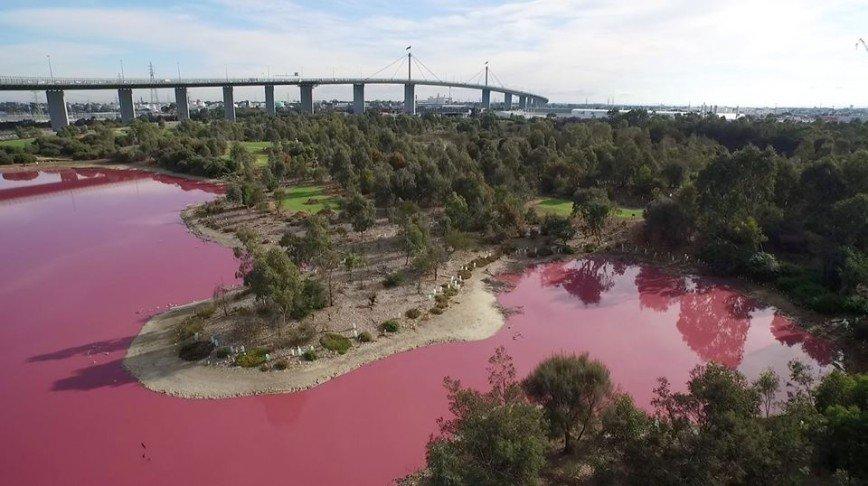 Знаменитое озеро в Австралии стало розовым