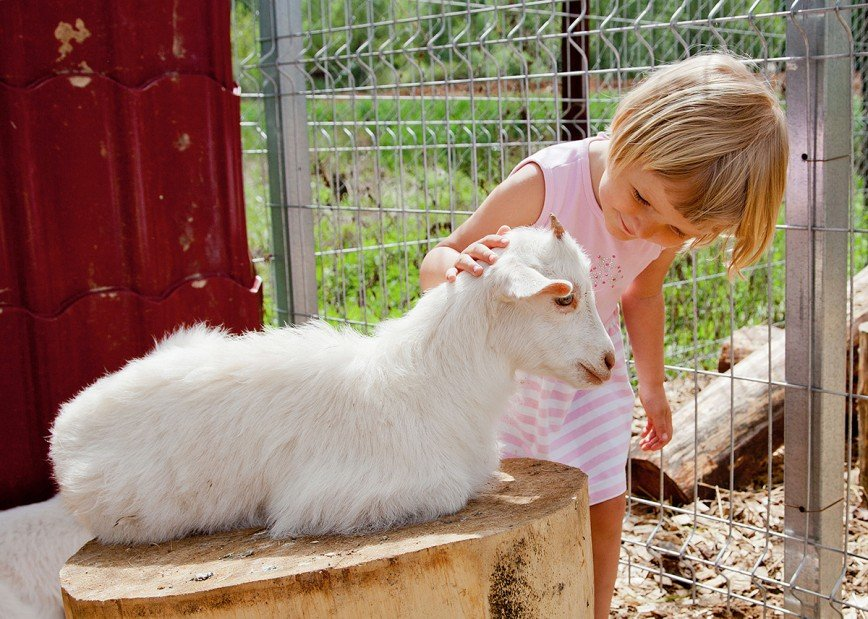 """""""Это вопрос ближайших месяцев"""": контактные зоопарки в России могут запретить"""