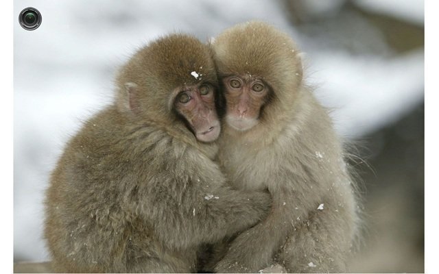 День всех влюблённых у животных