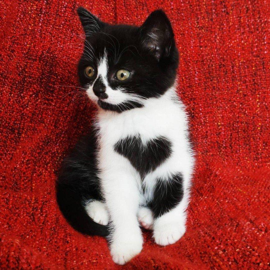 Сердечный кошачий инстаграм: Изначально хозяева хотели взять Иззи, но ,увидев Зоуи, они не устояли перед ее красотой и очарованием. А уже позже разглядели