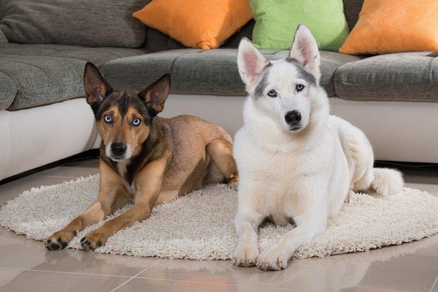 В Москве могут провести перепись домашних животных