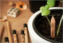 Посади карандаш и собери урожай