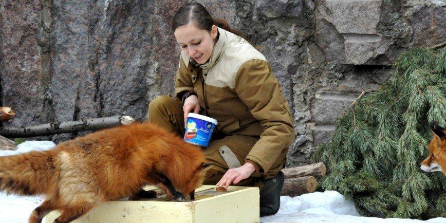 Животным в зоопарке придётся решить головоломку, чтобы поесть