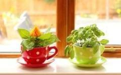 Комнатные растения - какие  выбрать для кухни
