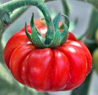 Витаминная серия. Летние овощи http://eva.ru/health/contest/contest-result.xhtml?contestId=3756