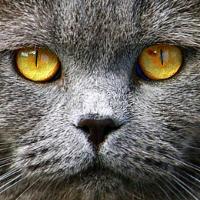 Глаз-алмаз http://eva.ru/animals/contest/contest-result.xhtml?contestId=3758  автор: ♕Пал-на http://eva.ru/181645