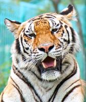 Фауна: Л.Е.Т.О. http://eva.ru/animals/contest/contest-result.xhtml?contestId=3743