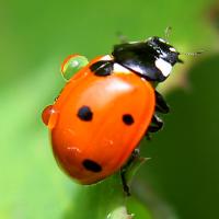 Стоп-игра. Мир насекомых http://eva.ru/animals/contest/contest-result.xhtml?contestId=3732
