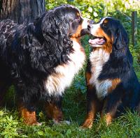 В гостях у сказки. Басни Крылова http://eva.ru/animals/contest/contest-result.xhtml?contestId=3736