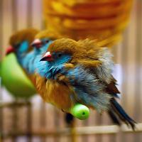 Радужное оперение http://eva.ru/animals/contest/contest-result.xhtml?contestId=3760