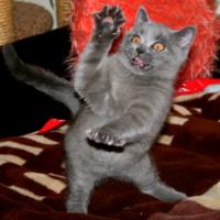 Я многое хочу сказать! http://eva.ru/animals/contest/contest-result.xhtml?contestId=3800  авторы: ☼So Velu☼ : http://eva.ru/173346 ✲саша05✲: http://eva.ru/114476