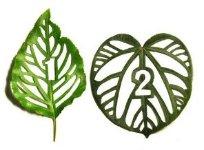 Арт-проект Cut Leaf Typo