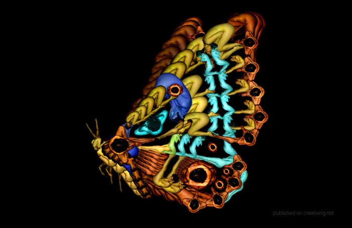 Цветы и бабочки из девушек от Сесилии Уэббер