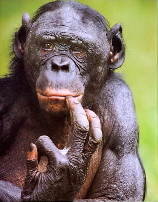 Картинки по запросу эмоции животных картинки