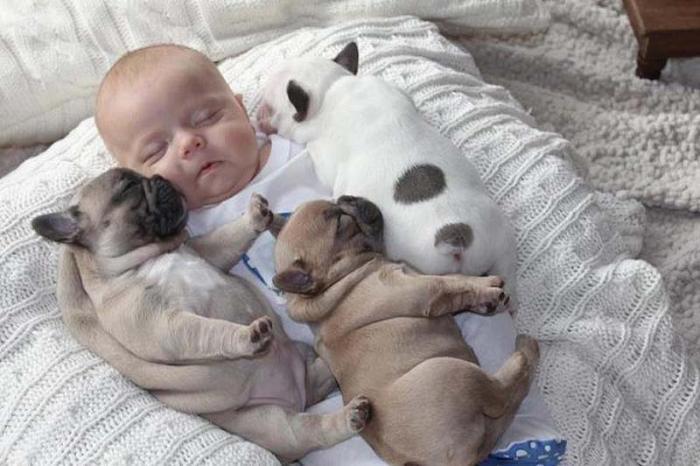 Картинки трое детей и собака
