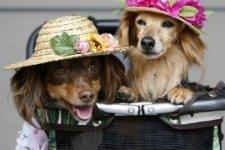 Стильные собачки-девочки