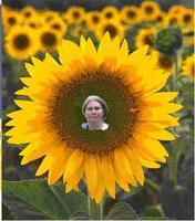 Мое фото Sunflower