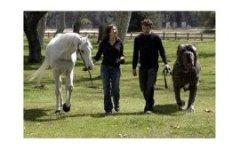 Топ 10.  Самые большие в мире собаки